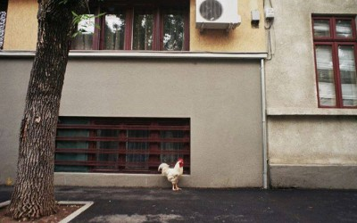 'the Rooster' by Dragos Alexandru, Bucharest, Romania, 2012