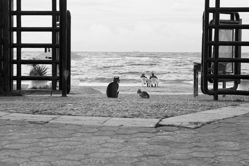 Couple-and-cats-Alexandria-Egypt