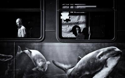 by Jianwei Yang, Vancouver, Canada